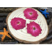 Quality Red Rose Natural Dried Flowers Vacuum Packing Diameter 3 - 3.5CM For Wedding Decoration for sale