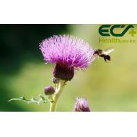 Quality Detoxification Pure Milk Thistle Extract Powder Herbal Nutritional Supplements for sale