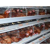 Quality Layer Cages for sale