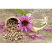 Quality Echinacea purpurea extract powder tonic material for sale