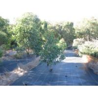 Ground Cover Film Quality Ground Cover Film For Sale