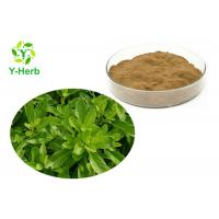 Quality Best Quality 10:1 50:1 100:1 5% Flavones Pure Powdered Gynura Procumbens Extract for sale