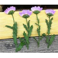 Quality Purple Dried Chrysanthemum Flower Color Optional For Candle Decoration for sale