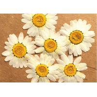 Quality Holidays Cards Nature DIY Pressed Flowers / Pressing Wedding Flowers for sale