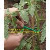 Buy cheap sfot garden twist tie from wholesalers