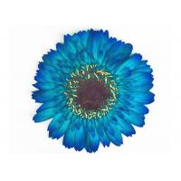 Quality Gerbera Framed Pressed Flowers Plant Material For DIY Parlor Decoration for sale