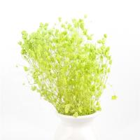 China Home Decorations Everlasting Beautiful Dried Flowers Babys breath Preserved for sale