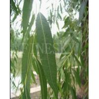 Quality White willow bark extract as home remedy for sale