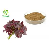 China Water Soluble Perilla Leaf Extract Powder Perilla Frutescens L Lowering Blood Pressure on sale