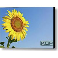 Quality White Canvas Polyester Glossy Digital Printing Canvas Water Resistant for sale