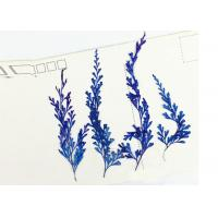 Quality Fern Leaves Real Dried Flowers / Pressed Flower Framed Art 6 Different Colors for sale