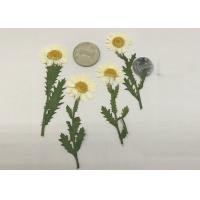 Quality Diameter 3CM Chrysanthemum Dried Flower Christmas Ornaments Color Customized for sale