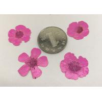 Quality DIY Framed Pressed Flowers Buttercup Flower Diameter 1.5CM For Beauty Nail Decoration for sale