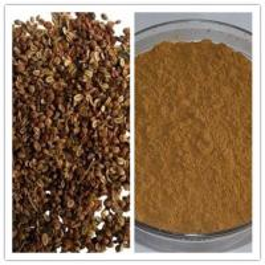 China Natural 10% 98% Osthole CAS No 484-12-8 Cnidium Monnieri Extract on sale
