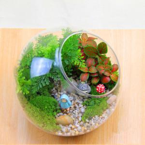 China Handmade Hign Borosilicate Terrarium Glass Bottle for Plant on sale