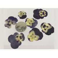 Quality Garden Pansy Small Dried Flowers 2.5CM Purple Color For Wall Painting Raw Materials for sale