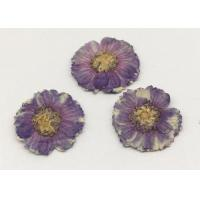 Quality Beauty Small Dried Flowers Diameter 1.5CM Color Optional For Necklace Ornament for sale