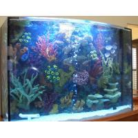 Quality 2012 hot sale fish and new design tank and cylindrical acrylic aquarium for sale