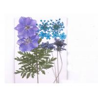 Quality Cell Phone Case Decoration Pressed Flower Bouquet Plant Specimens Mixed Color for sale