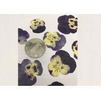 Quality Purple Pansy Real Pressed Flowers True Plant Material For Press Picture Ornaments for sale