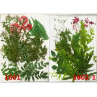 Quality Beautiful Pressed Plant Art , Dry Leaves Artwork For Christmas Party Gifts Decoration for sale