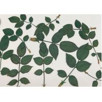 Quality Clover Specimens Green Dried Flowers / DIY Handmade Mounting Pressed Flowers for sale