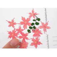 Quality Star Shaped Phlox Dried Flower Petal Crafts For Nail / Gift Card Decoration for sale