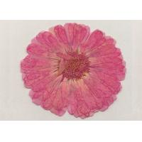 Quality Home Decoration Dried Calendula Flowers , Dried Pink Flowers For Wall Painting for sale