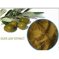 Buy cheap Organic Olive Leaf Extract For High Blood Pressure ,  Pure Olive Leaf Extract Super Strength from wholesalers