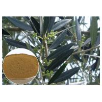 Buy Hydroxytyrosol Olive Leaf Extract For High Blood Pressure CAS 10597 60 1 at wholesale prices