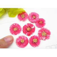 Quality 1 CM Small Dried Flowers Dye Absorption Daisy For Wall Painting Decoration for sale