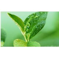 Quality Green Tea Polyphenols for sale