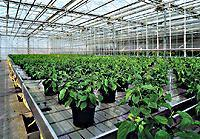 Quality Specification for greenhouse for sale