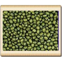 introduction of mung bean Assessment of mung bean quality through single kernel characterization authors introduction mung beans (vigna mung beans contain a wide range of nutrients.