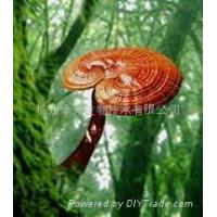 Quality Reishi Mushroom Extract for sale