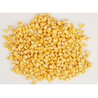 Quality Freeze-dried fruit and vegetables series FD CORN for sale