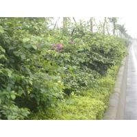 Buy cheap Landscaping from Wholesalers
