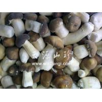 Quality Stropharia rugoso for sale