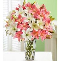 Buy cheap Pink And White Lilies from Wholesalers