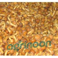Quality Frozen Nameko Mushroom for sale