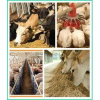 Quality Horse Feed Ingredients / Senior Horse Feed ZWE-3 for sale