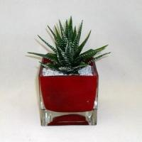 Quality Aloe in colored glass container for sale