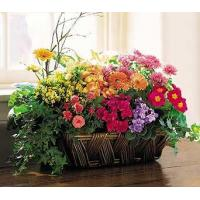 China Deluxe European Garden Basket on sale