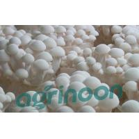 Quality Fresh White Beech Mushroom for sale