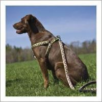 """Quality Lupine Dog Harness - 1"""" for sale"""