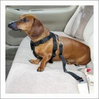Quality Pet Seat Belt Harness for sale