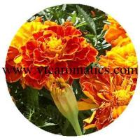 Quality Floral for sale