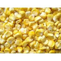 Quality FD Sweet Corn for sale
