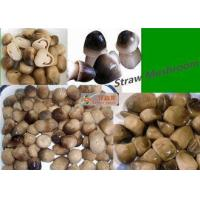 Quality 400g Canned Straw Mushroom In Tin White Yellow / Straw Mushroom In Brine for sale