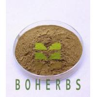 Quality Shiitake Mushroom Extract Powder Polysaccharides 10% 30% Protect Liver Anticancer for sale